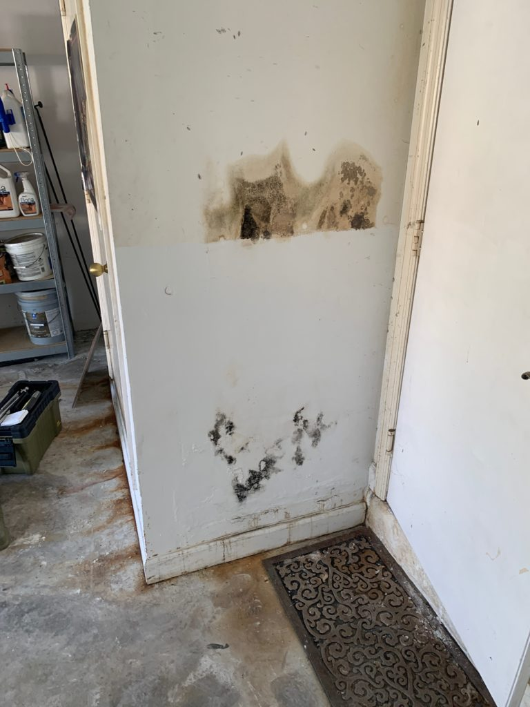 mold on home walls